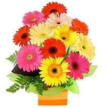 Gerberas presented in a Square Box: Send Flowers to Sydney