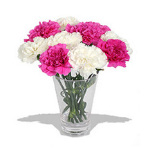 10 Pink n White Carnations in Vase: Send New Year Gifts to Canada