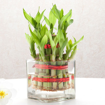 Flat 10% Off By Ferns N Petals | Bringing Good Luck Standard @ Rs.599