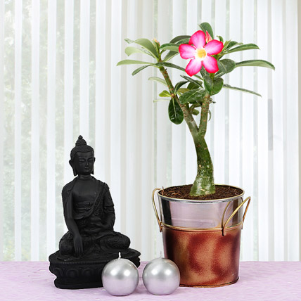 Desert Rose and Buddha