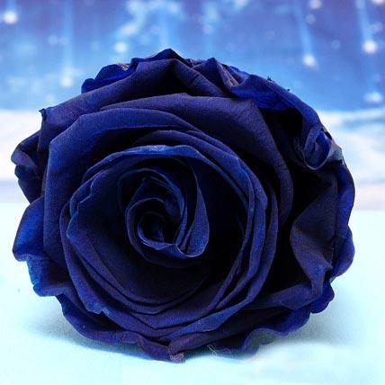 Forever Blue Roses