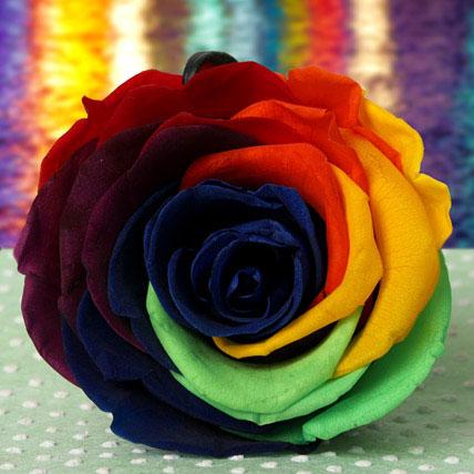 Forever Rainbow Rose
