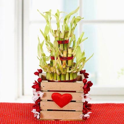 Love Lucky Bamboo