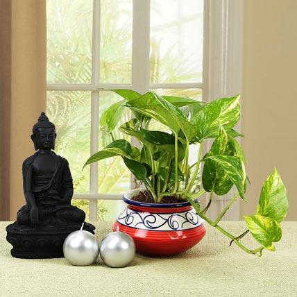 Serene Buddha and Plant