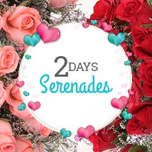 2 Days Magnificent Celebration: Valentines Day Roses