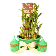 3 layers Lucky Bamboo Pot Hamper:  Good Luck Plants for Him