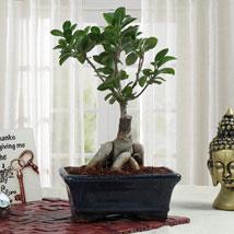 Bonsai Beauty: Send Plants