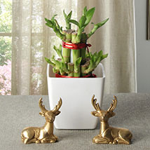 Lucky Bamboo With Deers: Send Lucky Bamboo