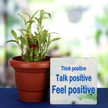 Lucky Inspirational Pair: Good Luck Plants