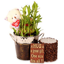 Lucky With Bamboo Hamper:  Good Luck Plants for Her