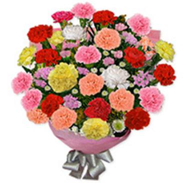 Carnation Carnival oma