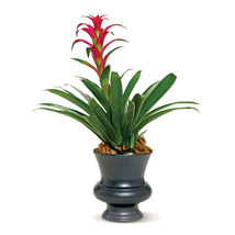 Blooming Bromeliad: Sympathy & Funeral Flowers Philippines