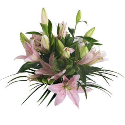 Lush Lillies in Pink
