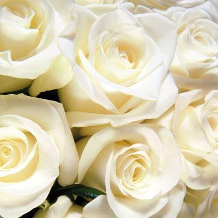 100 Long Stem White Roses
