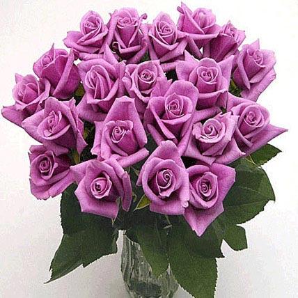 25 Long Stem Lavender Roses